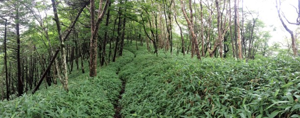 The trail overgrown with mountain grass.