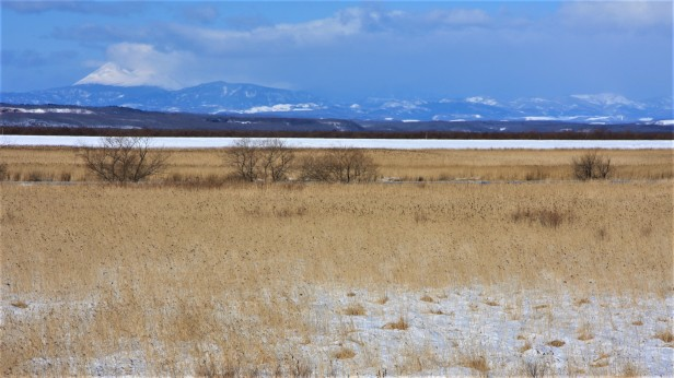 Kushiro_Wetland_winter