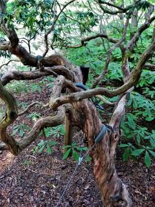 asebi_tree